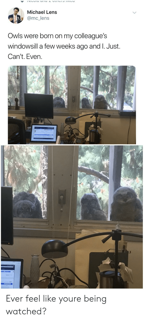 Just Cant Even: Michael Lens  @mc_lens  Owls were born on my colleague's  windowsill a few weeks ago and I. Just.  Can't. Even. Ever feel like youre being watched?