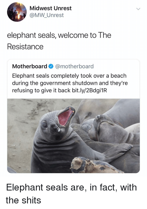 Beach, Elephant, and Dank Memes: Midwest Unrest  @MW Unrest  elephant seals, welcome to The  Resistance  Motherboard@motherboard  Elephant seals completely took over a beach  during the government shutdown and they're  refusing to give it back bit.ly/2Bdgi1R Elephant seals are, in fact, with the shits