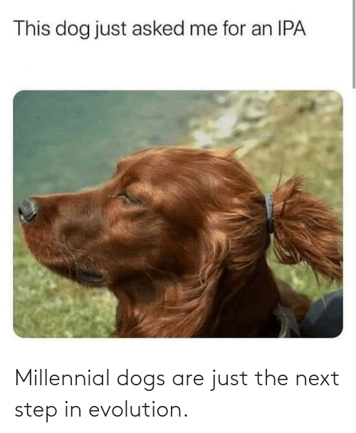 the next step: Millennial dogs are just the next step in evolution.