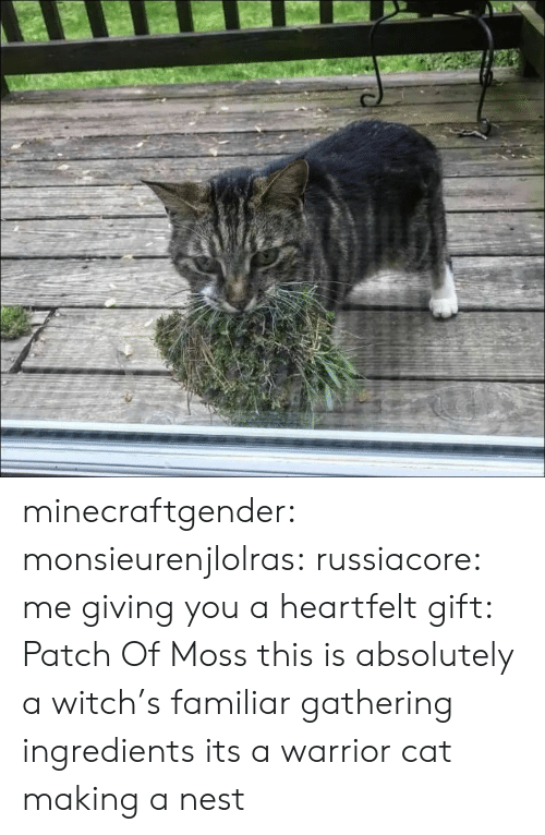 gathering: minecraftgender:  monsieurenjlolras:  russiacore: me giving you a heartfelt gift: Patch Of Moss  this is absolutely a witch's familiar gathering ingredients   its a warrior cat making a nest
