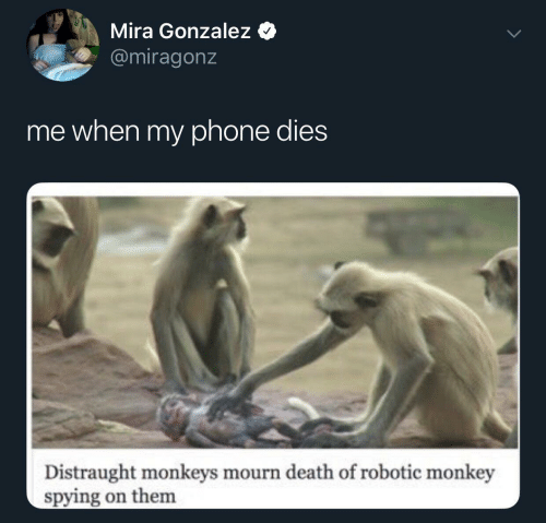 Gonzalez: Mira Gonzalez  @miragonz  me when my phone dies  Distraught monkeys mourn death of robotic monkey  spying on them