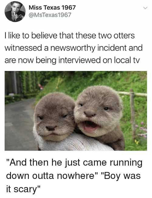 """Outta Nowhere: Miss Texas 1967  @MsTexas1967  I like to believe that these two otters  witnessed a newsworthy incident and  are now being interviewed on local tv """"And then he just came running down outta nowhere"""" """"Boy was it scary"""""""