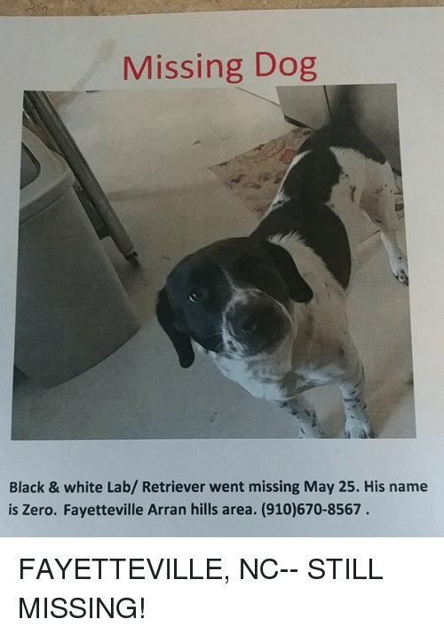 Missing Dog Black & White Lab Retriever Went Missing May 25