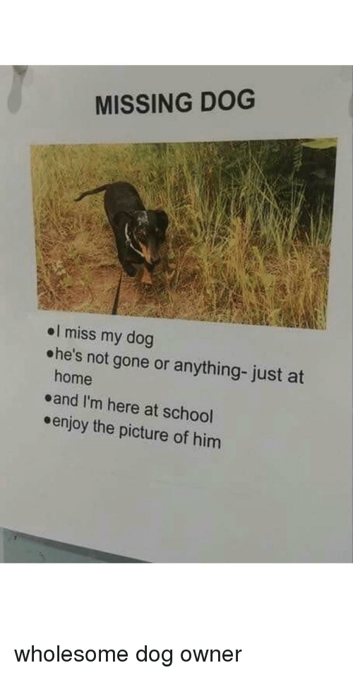 Miss My Dog: MISSING DOG  el miss my dog  ohe's not gone or anything- just at  home  eand I'm here at school  enjoy the picture of hinm wholesome dog owner