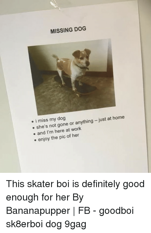 Miss My Dog: MISSING DOG  . i miss my dog  e she's not gone or anything-just at home  e and I'm here at work  e enjoy the pic of hen This skater boi is definitely good enough for her⠀ By Bananapupper | FB⠀ -⠀ goodboi sk8erboi dog 9gag