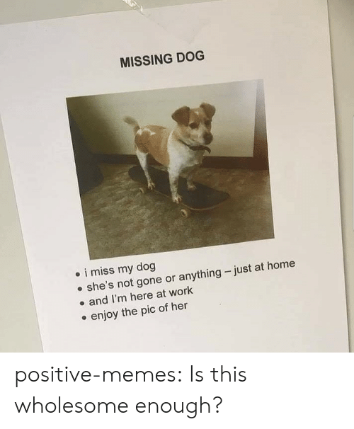 Anything Just: MISSING DOG  i miss my dog  she's not gone or anything just at home  and I'm here at work  enjoy the pic of her positive-memes:  Is this wholesome enough?
