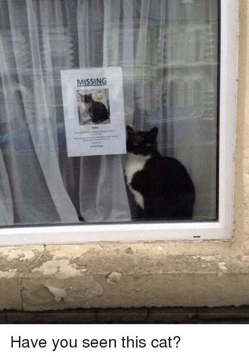 Have You Seen This Cat: MISSING