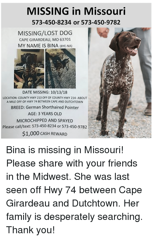 Girardeau: MISSING in Missouri  573-450-8234 or 573-450-9782  MISSING/LOST DOG  CAPE GIRARDEAU, MO 63701  MY NAME IS BINA (BYE-NA)  DATE MISSING: 10/13/18  LOCATION: COUNTY HWY 213 OFF OF COUNTY HWY 214-ABOUT  A MILE OFF OF HWY 74 BETWEEN CAPE AND DUTCHTOWN  BREED: German Shorthaired Pointer  AGE: 3 YEARS OLD  MICROCHIPPED AND SPAYED  Please call/text: 573-450-8234 or 573-450-9782  $1,000 CASH REWARD Bina is missing in Missouri!  Please share with your friends in the Midwest.  She was last seen off Hwy 74 between Cape Girardeau and Dutchtown.  Her family is desperately searching. Thank you!