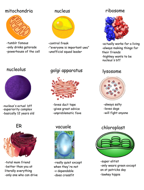 "Advice, Complex, and Dogs: mitochondria  nucleus  ribosome  tumblr famous  only drinks gatorade  powerhouse of the cell unofficial squad leader  -control freak  actually works for a living  always making things for  their friends  highkey wants to be  nucleus's bff  ""everyone is important uwu""  nucleolus  golgi apparatus  lysosome  -nucleus's actual bff  superiority complex  basically 12 years old  loves duct tape  gives great advice  -unproblematic fave  always salty  loves dogs  will fight anyone  ER  vacuole  chloroplast  total mom friend  better than you at  literally everything  only one who can drive  really quiet except  when they're not  -v dependable  -does crossfit  super elitist  only wears green except  on st patricks day  -lowkey hippie"