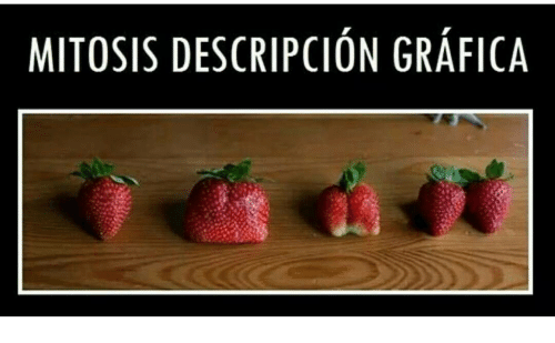 mitosis: MITOSIS DESCRIPCION GRAFICA