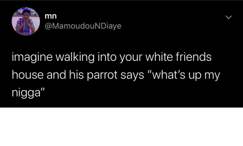 """White: mn  @MamoudouNDiaye  imagine walking into your white friends  house and his parrot says """"what's up my  nigga"""""""