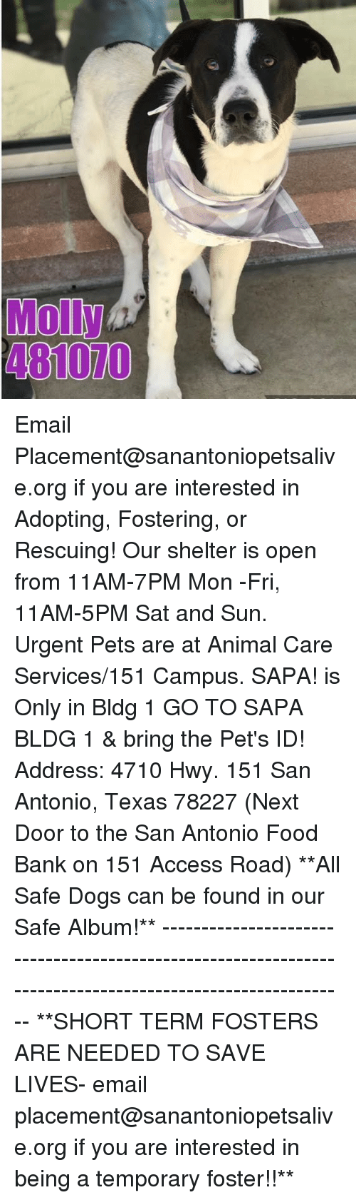 Dogs, Food, and Memes: Molly  481070 Email Placement@sanantoniopetsalive.org if you are interested in Adopting, Fostering, or Rescuing!  Our shelter is open from 11AM-7PM Mon -Fri, 11AM-5PM Sat and Sun.  Urgent Pets are at Animal Care Services/151 Campus. SAPA! is Only in Bldg 1 GO TO SAPA BLDG 1 & bring the Pet's ID! Address: 4710 Hwy. 151 San Antonio, Texas 78227 (Next Door to the San Antonio Food Bank on 151 Access Road)  **All Safe Dogs can be found in our Safe Album!** ---------------------------------------------------------------------------------------------------------- **SHORT TERM FOSTERS ARE NEEDED TO SAVE LIVES- email placement@sanantoniopetsalive.org if you are interested in being a temporary foster!!**