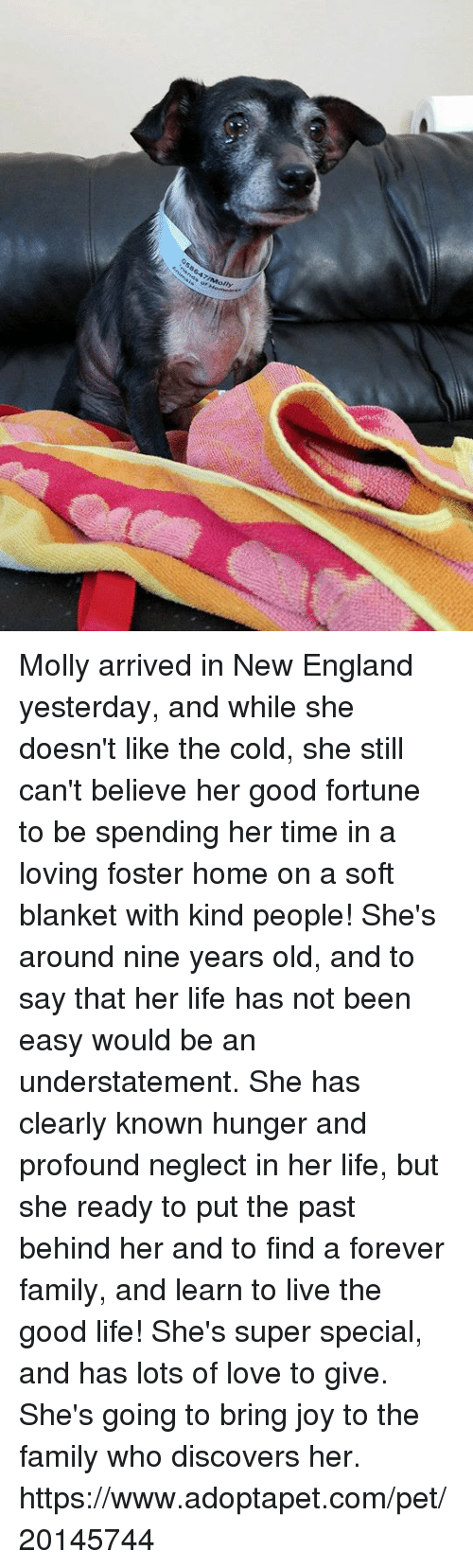a description of the background of molly and her family Describe my family there are 6 people in my family i have two brothers and one sister i am the i love her and my parents very much.