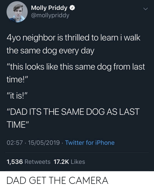 """molly: Molly Priddy Q  @mollypriddy  4yo neighbor is thrilled to learn i walk  the same dog every day  """"this looks like this same dog from last  time!""""  """"DAD ITS THE SAME DOG AS LAST  TIME""""  02:57 15/05/2019 Twitter for iPhone  1,536 Retweets 17.2K Likes DAD GET THE CAMERA"""