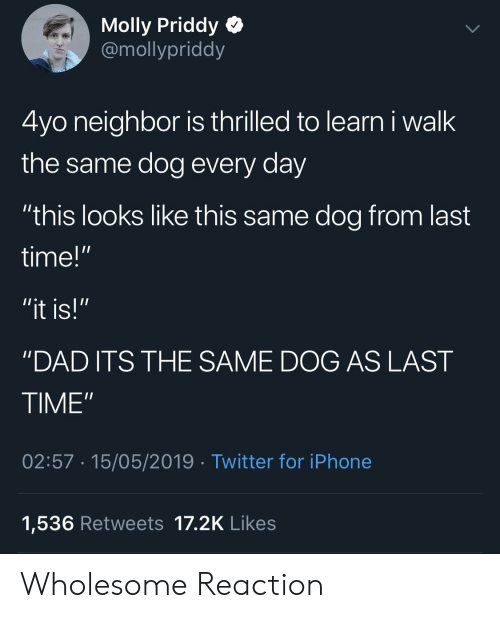 """molly: Molly Priddy Q  @mollypriddy  4yo neighbor is thrilled to learn i walk  the same dog every day  """"this looks like this same dog from last  time!""""  """"DAD ITS THE SAME DOG AS LAST  TIME""""  02:57 15/05/2019 Twitter for iPhone  1,536 Retweets 17.2K Likes Wholesome Reaction"""
