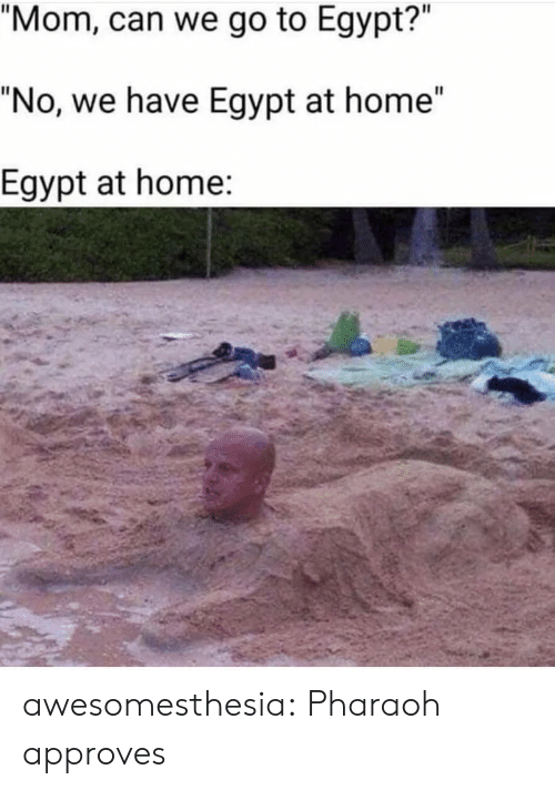 "Approves: ""Mom, can we go to Egypt?""  ""No, we have Egypt at home""  Egypt at home: awesomesthesia:  Pharaoh approves"