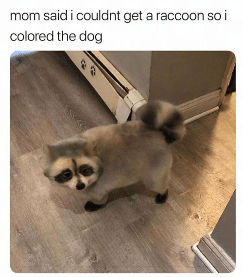 Raccoon, Mom, and Dog: mom said i couldnt get a raccoon so i  colored the dog  $4