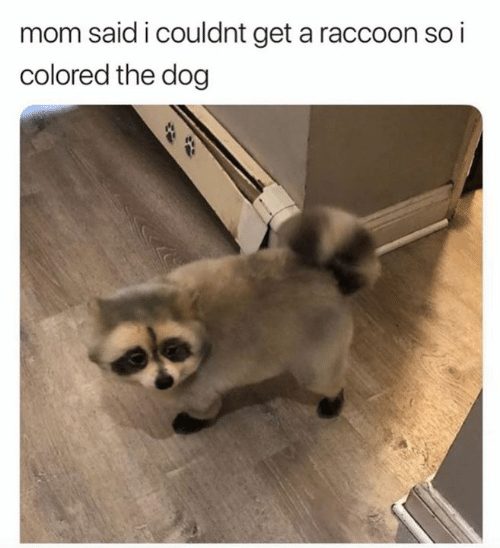 Raccoon, Mom, and Dog: mom said i couldnt get a raccoon so i  colored the dog