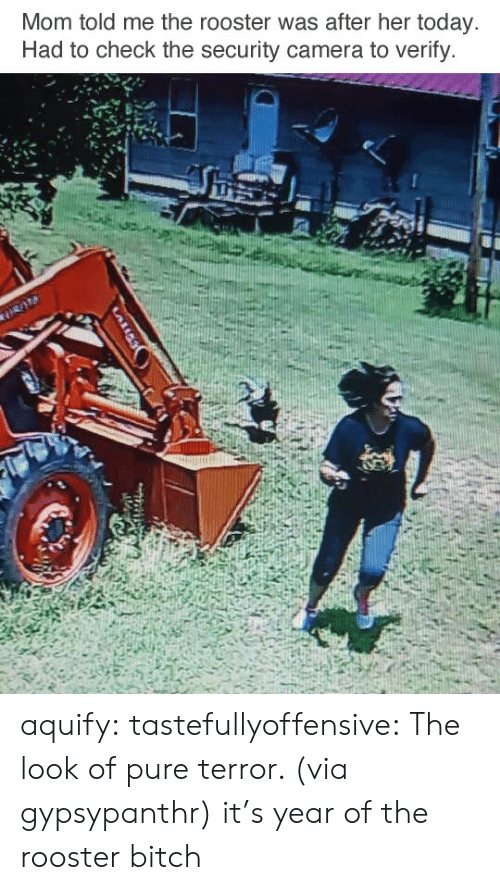 Bitch, Reddit, and Tumblr: Mom told me the rooster was after her today  Had to check the security camera to verify. aquify: tastefullyoffensive: The look of pure terror. (via gypsypanthr) it's year of the rooster bitch