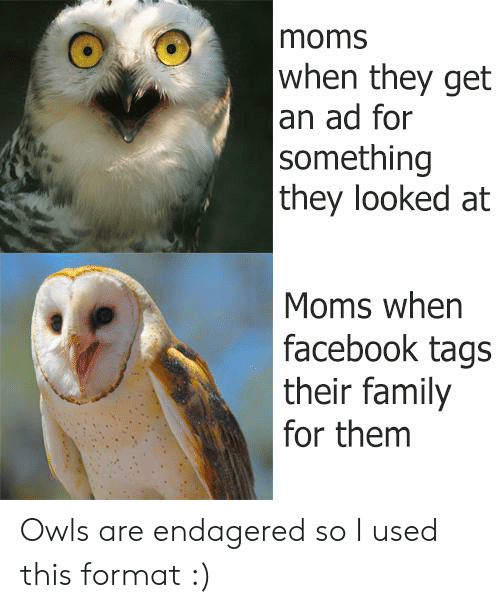 Facebook, Family, and Moms: moms  when they get  an ad for  something  they looked at  Moms when  facebook tags  their family  for them Owls are endagered so I used this format :)