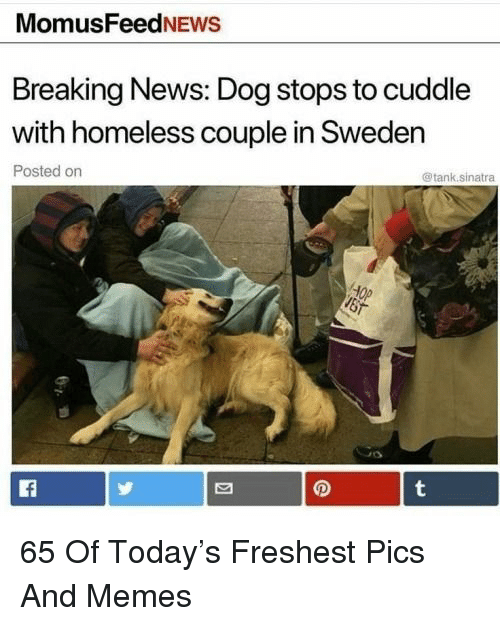 Cuddle With: MomusFeedNEws  Breaking News: Dog stops to cuddle  with homeless couple in Sweden  Posted orn  @tank.sinatra  Op 65 Of Today's Freshest Pics And Memes