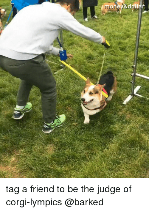 Dall: mone &dall tag a friend to be the judge of corgi-lympics @barked