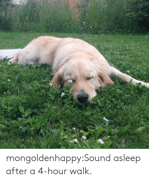 Target, Tumblr, and Blog: mongoldenhappy:Sound asleep after a 4-hour walk.