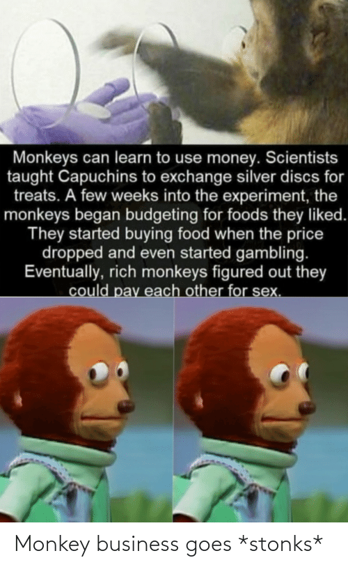 Monkey: Monkey business goes *stonks*
