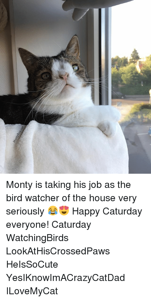 Watcher: Monty is taking his job as the bird watcher of the house very seriously 😂😍 Happy Caturday everyone! Caturday WatchingBirds LookAtHisCrossedPaws HeIsSoCute YesIKnowImACrazyCatDad ILoveMyCat