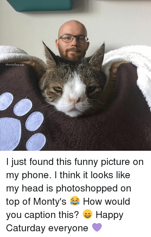 funny picture: MontyBoy.net I just found this funny picture on my phone. I think it looks like my head is photoshopped on top of Monty's 😂 How would you caption this? 😄 Happy Caturday everyone 💜