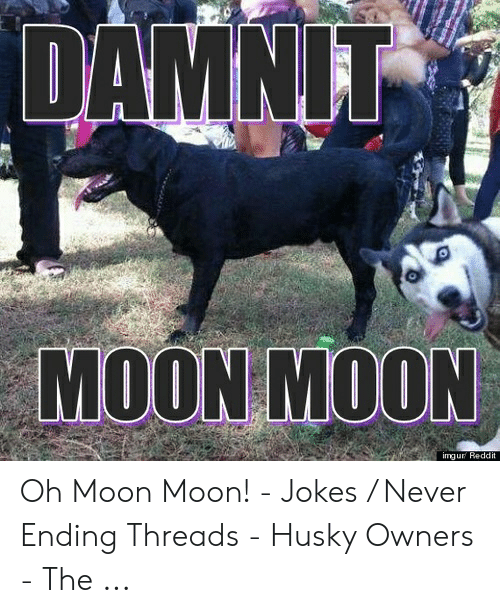 funny moon jokes and pictures moon myths funny jokes - 500×613