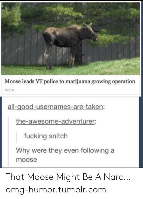 Usernames: Moose leads VT police to marijuana growing operation  NECN  all-good-usernames-are-taken:  the-awesome-adventurer:  fucking snitch  Why were they even following a  moose That Moose Might Be A Narc…omg-humor.tumblr.com