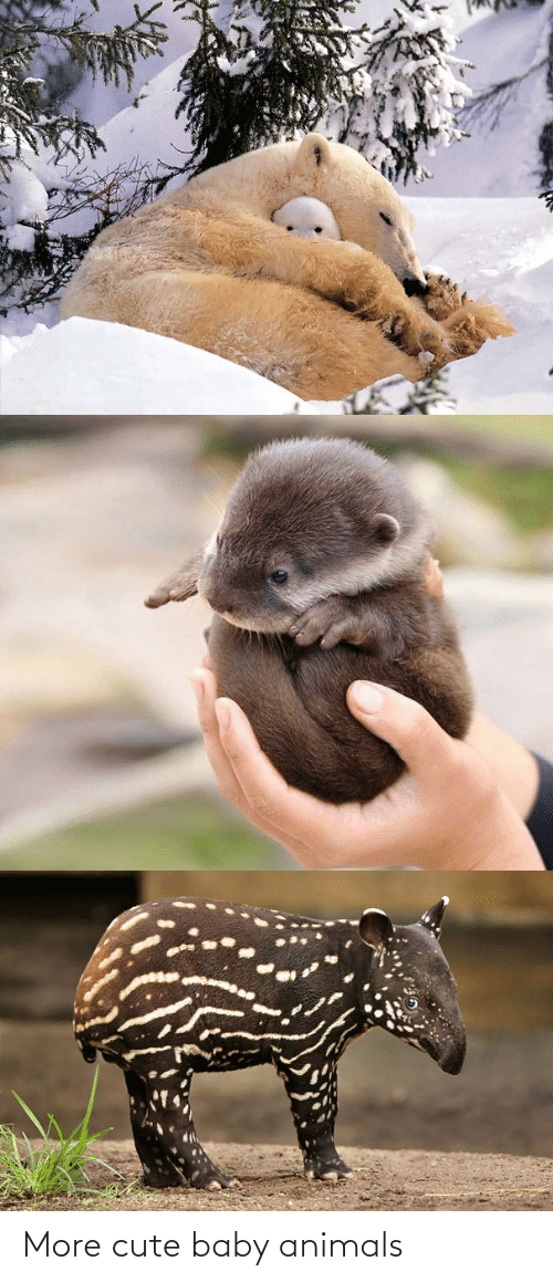 cute: More cute baby animals