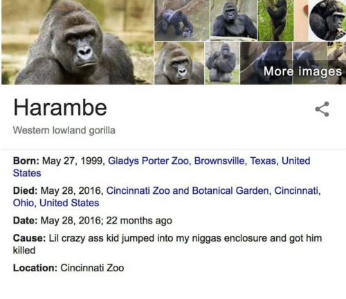 my niggas: More images  Harambe  Western lowland gorilla  Born: May 27, 1999, Gladys Porter Zoo, Brownsville, Texas, United  States  Died: May 28, 2016, Cincinnati Zoo and Botanical Garden, Cincinnati,  Ohio, United States  Date: May 28, 2016; 22 months ago  Cause: Lil crazy ass kid jumped into my niggas enclosure and got him  killed  Location: Cincinnati Zoo