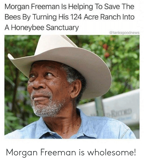 freeman: Morgan Freeman Is Helping To Save The  Bees By Turning His 124 Acre Ranch Into  A Honeybee Sanctuary  @tanksgoodnews Morgan Freeman is wholesome!