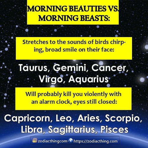 Capricorn: MORNING BEAUTIES VS  MORNING BEASTS:  Stretches to the sounds of birds chirp-  ing, broad smile on their face:  Taurus, Gemini, Cancer,  Virgo, Aquarius  Will probably kill you violently with  an alarm clock, eyes still closed:  Capricorn, Leo, Aries, Scorpio,  Libra, Sagittarius, Pisces  zodiacthingcomhttps://zodiacthing.com