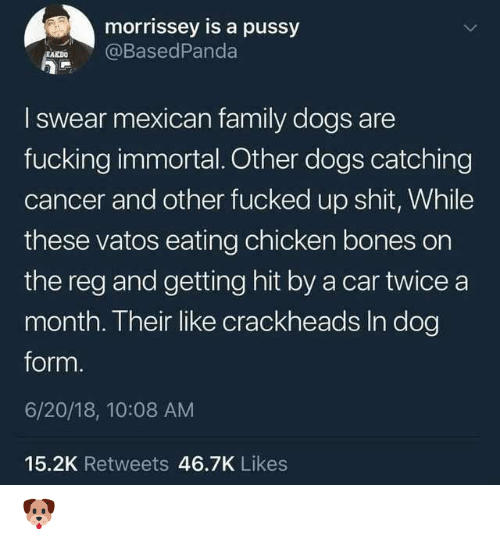 Hit By A Car: morrissey is a pussy  @BasedPanda  I swear mexican family dogs are  fucking immortal. Other dogs catching  cancer and other fucked up sht, While  these vatos eating chicken bones on  the reg and getting hit by a car twice a  month. Their like crackheads In dog  form.  6/20/18, 10:08 AM  15.2K Retweets 46.7K Likes 🐶