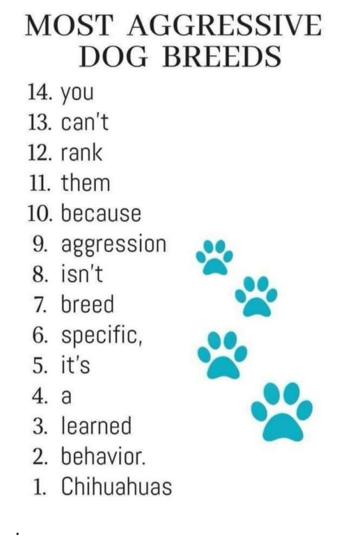 Aggression: MOST AGGRESSIVE  DOG BREEDS  14. you  13. can't  12. rank  11. them  10. because  9. aggression  8. isn't  7. breed  6. specific,  5. it's  4. a  3. learned  2. behavior.  1. Chihuahuas .