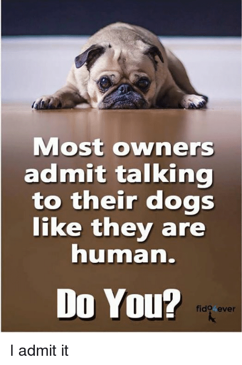 I Admit It: Most owners  admit talking  to their dogs  like they are  human.  Do You?  fido ever I admit it