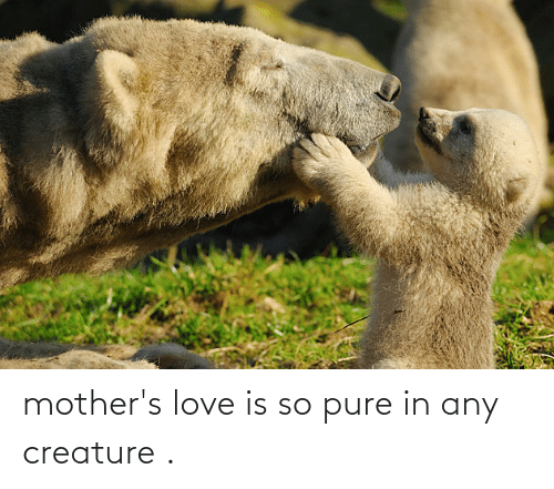 creature: mother's love is so pure in any creature .
