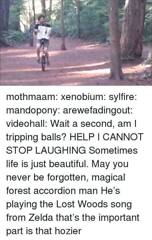 Beautiful, Life, and Tumblr: mothmaam:  xenobium:  sylfire:  mandopony:  arewefadingout:  videohall:  Wait a second, am I tripping balls?  HELP I CANNOT STOP LAUGHING  Sometimes life is just beautiful.  May you never be forgotten, magical forest accordion man  He's playing the Lost Woods song from Zelda that's the important part  is that hozier