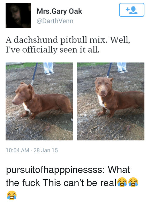 dachshund: Mrs.Gary Oak  @DarthVenn  A dachshund pitbull mix. Well,  I've officially seen it all.  10:04 AM 28 Jan 15 pursuitofhapppinessss:  What the fuck  This can't be real😂😂😂