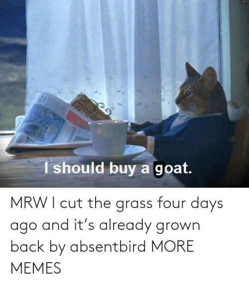 Dank, Memes, and Mrw: MRW I cut the grass four days ago and it's already grown back by absentbird MORE MEMES