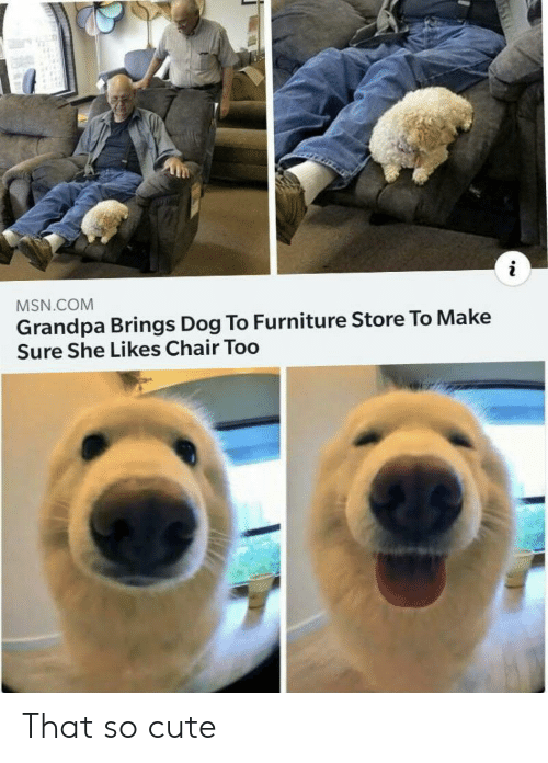 She Likes: MSN.COM  Grandpa Brings Dog To Furniture Store To Make  Sure She Likes Chair Too That so cute