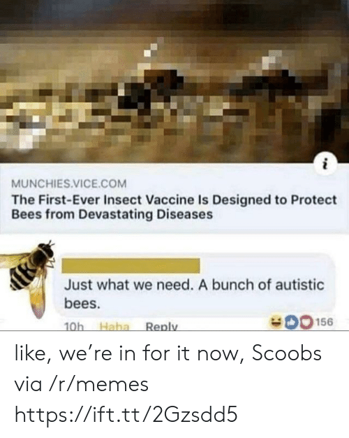 Memes, Munchies, and Bees: MUNCHIES.VICE.COM  The First-Ever Insect Vaccine Is Designed to Protect  Bees from Devastating Diseases  Just what we need. A bunch of autistic  bees.  O156  Haha  Reply  10h like, we're in for it now, Scoobs via /r/memes https://ift.tt/2Gzsdd5