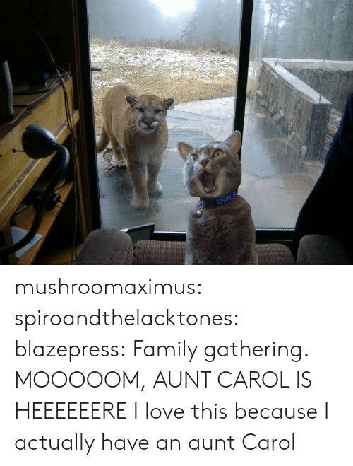Family, Love, and Tumblr: mushroomaximus:  spiroandthelacktones:  blazepress:  Family gathering.  MOOOOOM, AUNT CAROL IS HEEEEEERE  I love this because I actually have an aunt Carol