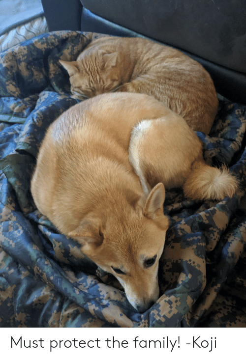 Family, Koji, and  the Family: Must protect the family! -Koji