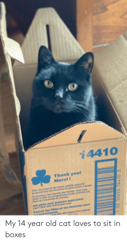 14 Year Old: My 14 year old cat loves to sit in boxes