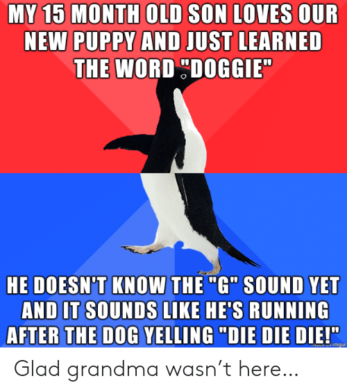 "Puppy: MY 15 MONTH OLD SON LOVES OUR  NEW PUPPY AND JUST LEARNED  THE WORD DOGGIE  HE DOESN'T KNOW THE ""G"" SOUND YET  AND IT SOUNDS LIKE HE'S RUNNING  AFTER THE DOG YELLING ""DIE DIE DIE!""  haue imgur Glad grandma wasn't here…"