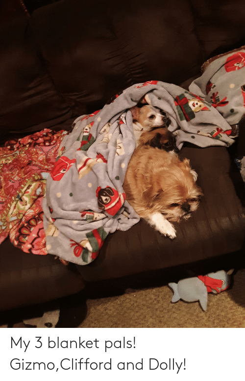 clifford: My 3 blanket pals! Gizmo,Clifford and Dolly!